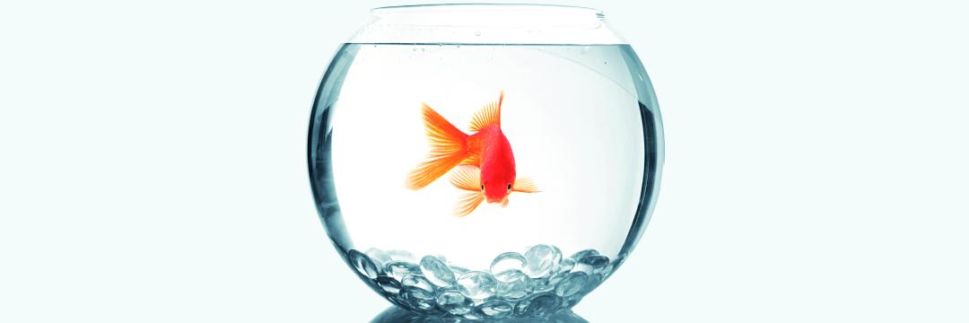 Fisch in einem sauberen Fischglas